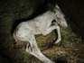 BaroloAsFoal.jpg